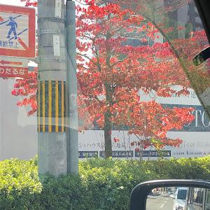 スペーシアカスタム MK53S のカスタム事例画像 たけ☆やんさんの2020年10月28日00:31の投稿