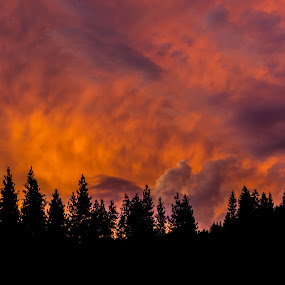 4th of July Sunset by Scott Morgan - Landscapes Sunsets & Sunrises ( clouds, orange, tree line, sunset, cloudscape, cloudy, trees, landscape, tree tops,  )