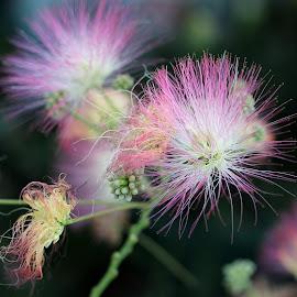 by Biljana Nikolic - Flowers Tree Blossoms (  )
