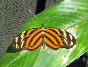 Photo: Muutama perhoskuvakin onnistui, melkein ainakin
