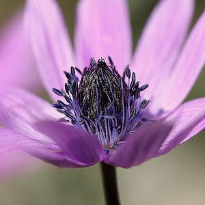 Ljubičasti cvijet s peteljkama.jpg