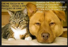 cani e gatti vignetta - Cerca con Google