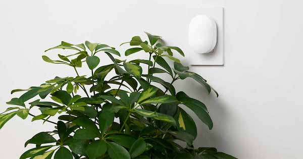 Nest secure connect wall plant.
