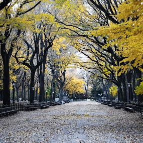 Autumn in Central Park, New York City by Sandeep Kochar - City,  Street & Park  Vistas ( park, autumn, trees, new york city, central park )