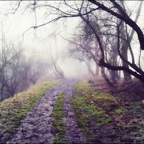 Opole by Marta Bednarska - Landscapes Forests ( fog landscapes )