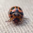 Wattle ladybug mimic