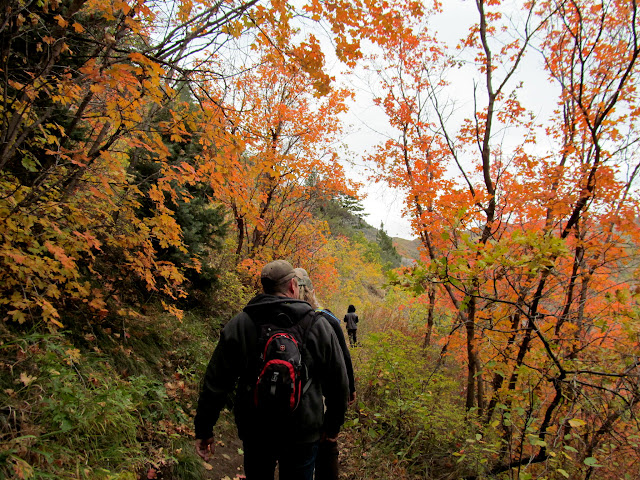 Hiking through brilliant orange maple