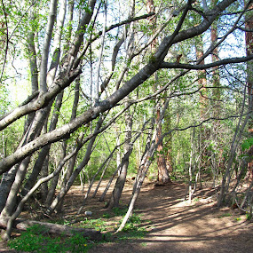 A Walk In Greenough Park by Gregg Landry - Nature Up Close Trees & Bushes ( montana, parks, trees, missoula, shade )