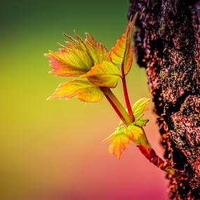 spring by Sunil Pawar - Nature Up Close Trees & Bushes ( tree, shoot, color, beautiful, trees, forest, yellow, beauty, leaves, bud, spring, light,  )