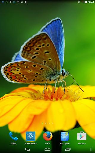 Butterfly. Live wallpaper.