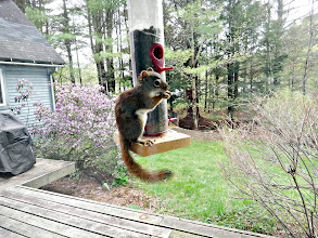Photo: Looking through sliding door at a red squirrel on feeder