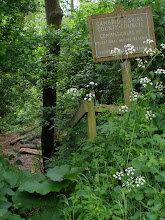 Photo: The gentle decline of Commissioners Pit Educational Nature Reserve