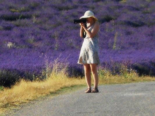 fotografare il viola di provenza