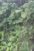 "Photo: Descending into the jungle.  There are ""normal"" ferns at the bottom of the photo"