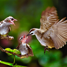 Hungry Birdies by Goh Poh Leong - Animals Birds
