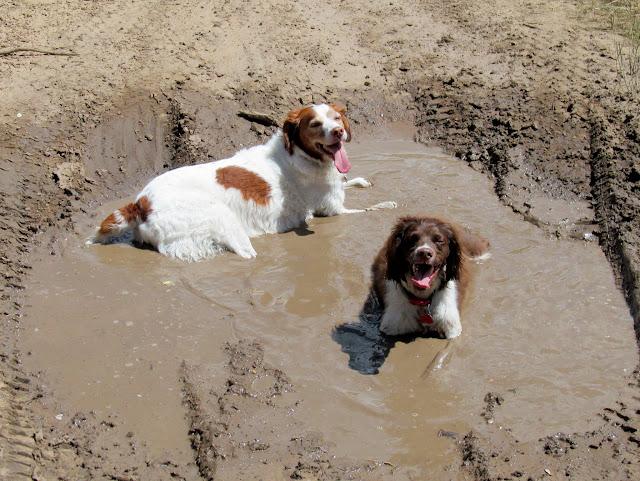 Dumb dogs!