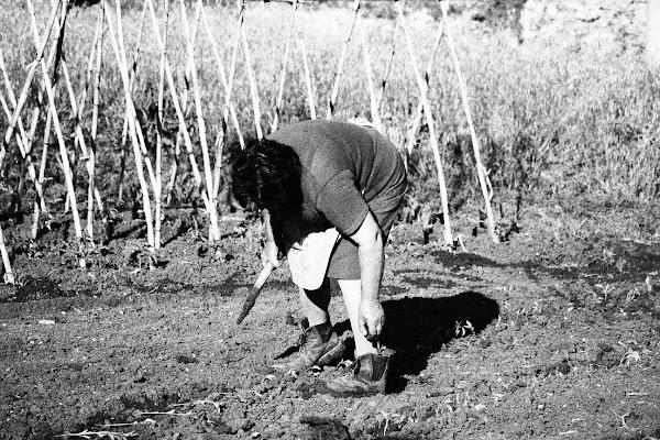 L'agricoltura e i suoi attori di Photolo