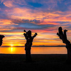 Three trees sunset by Patrick Janson - Landscapes Sunsets & Sunrises ( clouds, silhouette, sunset, beach, sun, norway,  )