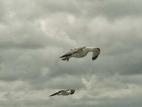 Photo: Möwen (Seagulls) bei Dover