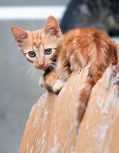 Cautious by Gabriel Catalin - Animals - Cats Kittens (  )