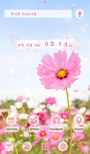 Pink Cosmos  Flower Theme 1.0.0 Windows u7528 5