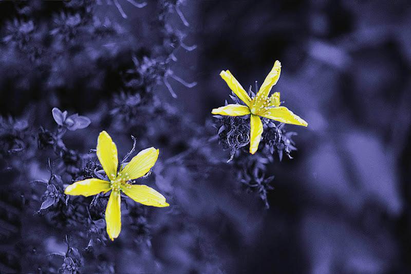 la natura colorata di giallo e grigio di ciro_narzisi