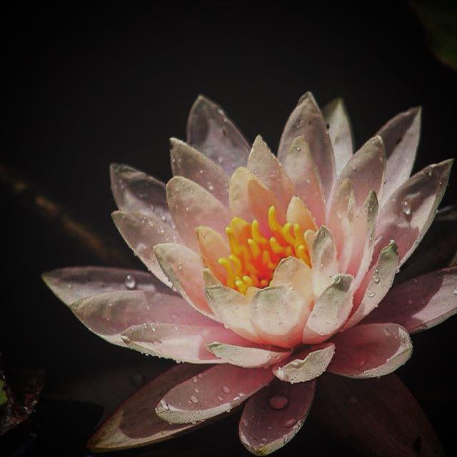 by Donna Edgeworth - Flowers Single Flower
