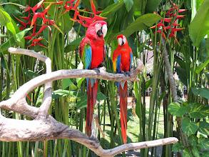 Photo: Красныйара Ara macao