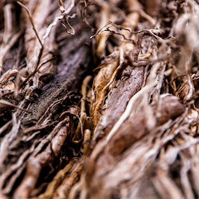 Dried air roots by Jan Crawford - Nature Up Close Other Natural Objects ( abstract, up close, nature, tree, roots, brown,  )