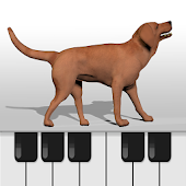 Dog Piano Keyboard