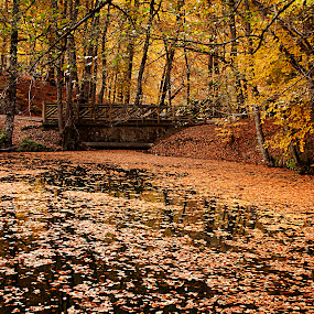 AUTUMN TIME by Nihan Bayındır - Landscapes Forests ( love, forest, view, falls, autumn, trees, passion, landscape, colors, photography,  )