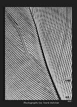 Photo: Macro shot of a bird feather.  http://www.hatch1921.com