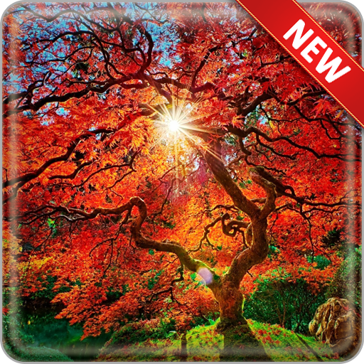 Autumn Trees Wallpapers Android APK Download Free By Modux Apps