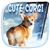 3D Rump Shaking Corgi Dog Theme&Live wallpaper