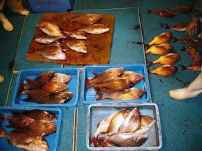 Photo: 全部で40数匹でした! 大きいもので3kg後半でした! 釣った魚均等に分けて持って帰りました。