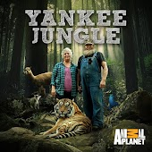 Yankee Jungle