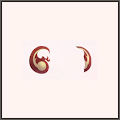吉祥猿の耳