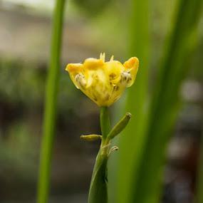 by Agus Aktawan - Flowers Flower Gardens