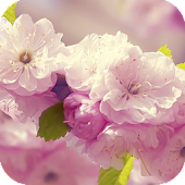 Flowers 3D live wallpaper