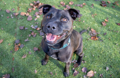 RSPCA's Pets of the Week – Rocco and Waffle