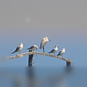 Egret and friends by Fereshteh Molavi - Landscapes Waterscapes ( wood, waves, sea, sun, birda )