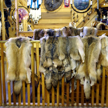 Photo: The store is full of many locally-killed pelts of all kinds