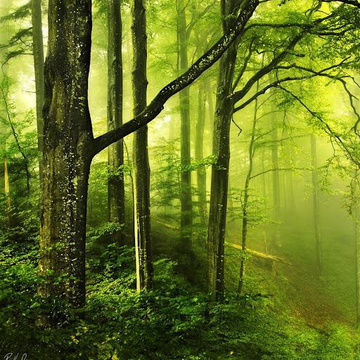 숲라이브 배경 화면