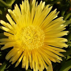 by Elenka Smilenova - Flowers Single Flower ( macro flowers garden spring )