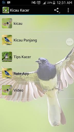 Kicau Kacer