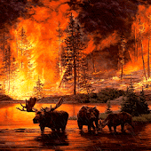 Forest Fire Live Wallpaper