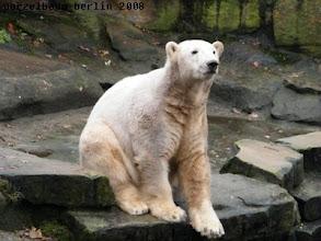 Photo: Knut entscheidet - alles in Ordnung in meinem Zuhause :-)
