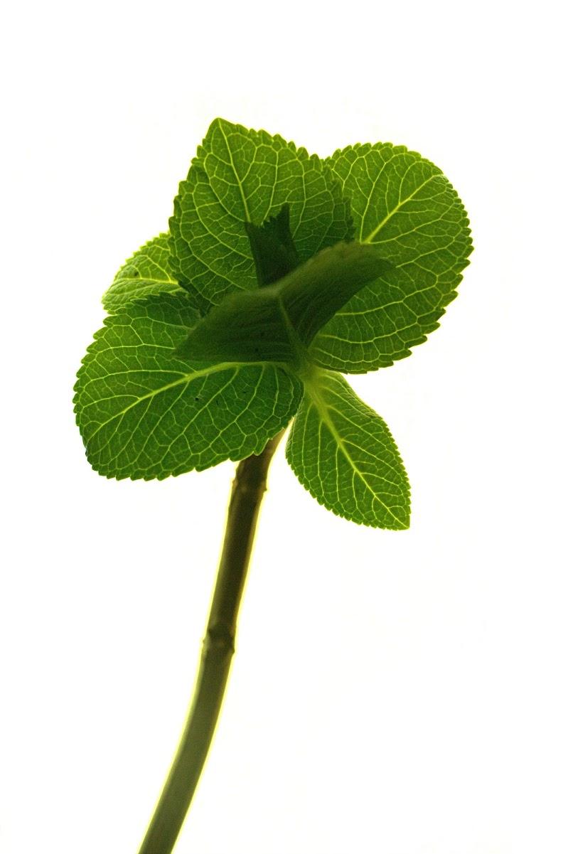 Verde rinascita. di Mcmelon