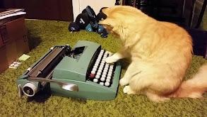Pug Life thumbnail