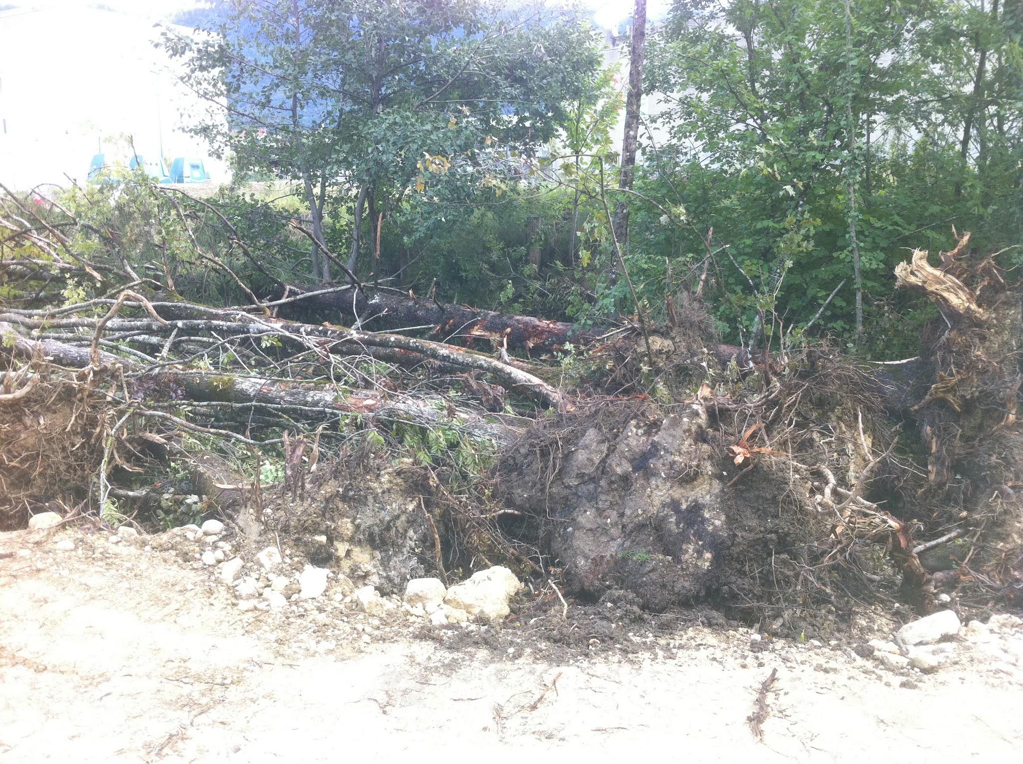 Photo: Plus d'arbres